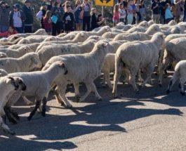 Айдахо, овцы, шоссе,