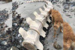 Огромный скелет неизвестного существа найден в Великобритании