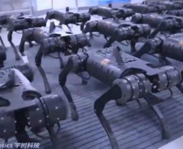 Китай, роботы, убийцы, собаки,