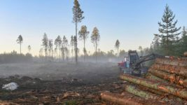Нидерланды, леса, вырубка,
