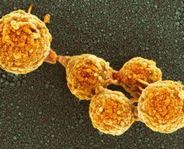 клетки, лаборатория, бактерии, искусственная жизнь,
