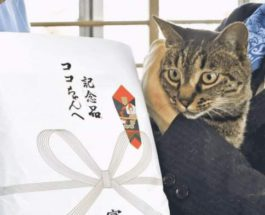 кот, спасение, Япония,