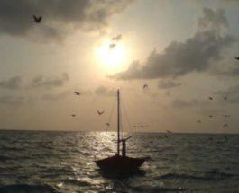 лодка, ЮАР, кит,