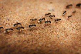 муравьи, социализация,