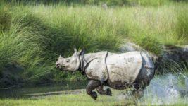 носороги, Непал, популяция,