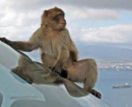 обезьяны, зоопарк, побег,