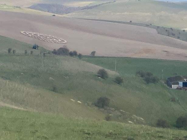 овцы круг