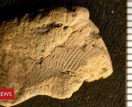 отпечаток пальца, Шотландия, археология,