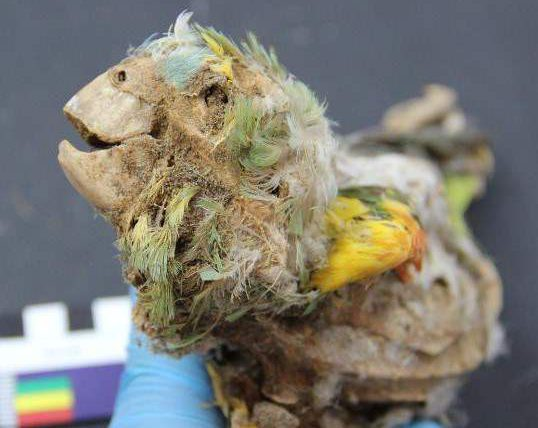 попугаи, пустыня, Атакама, мумификация,