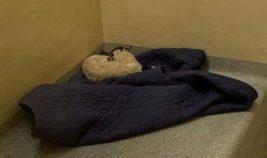 тюремная камера, Ягненок, овца, Ирландия,