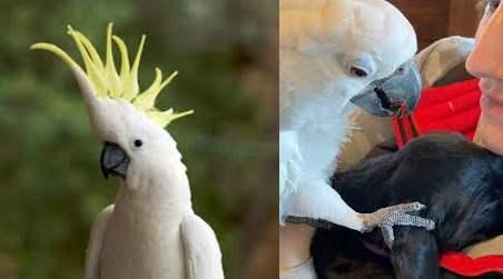 Щенок, попугай, Дружба,