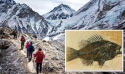 Открытие Библии: «морские окаменелости», обнаруженные на вершине Эвереста, «могут быть доказательством Великого потопа»