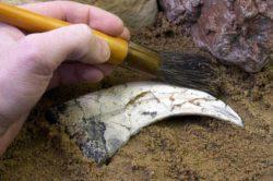 Нашли динозавра неизвестного доселе вида