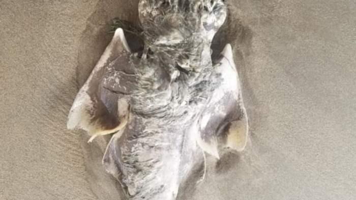 Морской зверь, акула, ангел,
