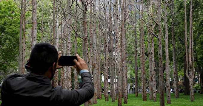 Призрачный лес, Нью-Йорк,