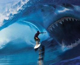 акула, серфер, Австралия,