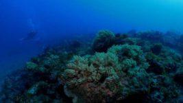 коралловые рифы,