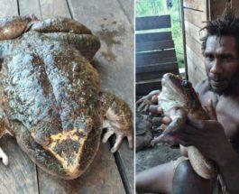 лягушка, Соломоновы острова,