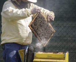 пчелы, Вена, Австрия,