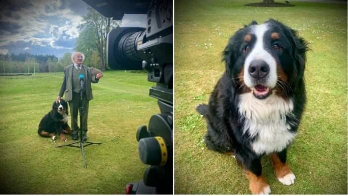 собака, Ирландия, президент,