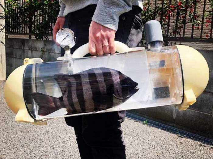сумка, рыба, устройство,