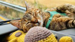 Мир Налы: Шотландец Дин Николсон путешествует по миру с котенком (ФОТО)