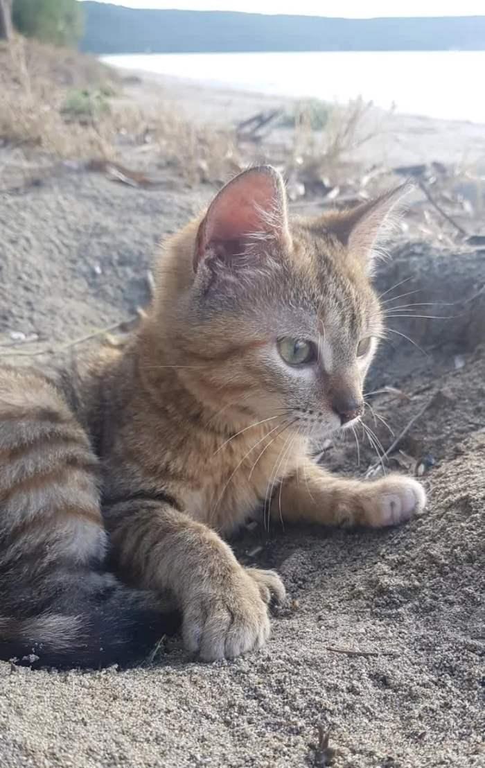 Дин Николсон, Мир Налы, Нала, кот,