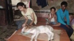 Божественное чудо: в Индии появился теленок с двумя головами и четырьмя глазами