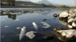 Причина массового вымирания рыбы в реке Йеллоустон установлена