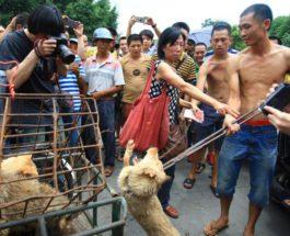 Китай, еда, собаки, собачье мясо, фестиваль,