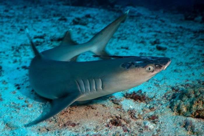 Малайзия, акула, изменение климата,