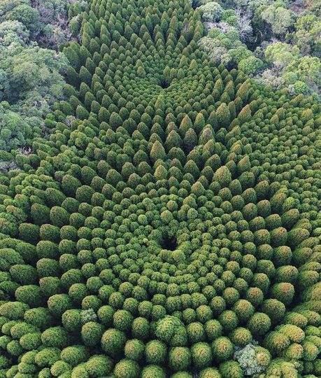 Миядзаки, Япония, лес, круги,