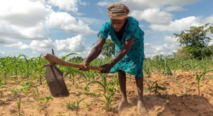 ООН, засуха, Сирия,