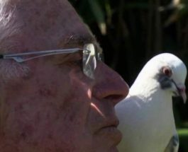 голубь, Пенсионер, Франция,
