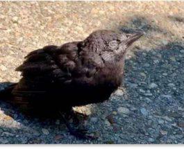 птицы, смерть птиц, США,