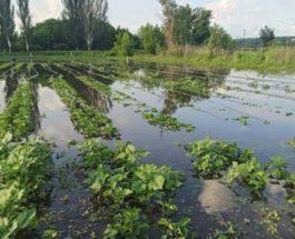 урожай потоп