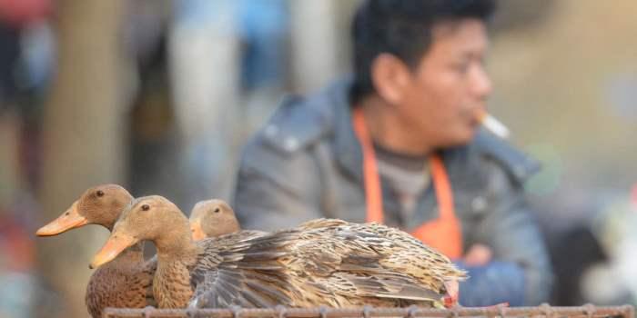 H10N3, птичий грипп, Китай,