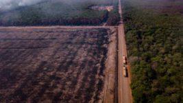 Амазония, Амазонка, леса, углекислый газ,