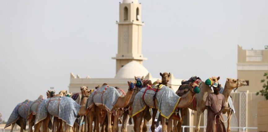 Дубай, ученые, верблюды, коронавирус,