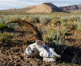 Казахстан, засуха,