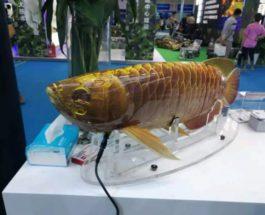Китай, робот, рыба,