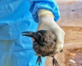 США, птицы, болезнь,
