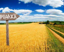 Украина, рынок земли, закон № 552-IX, продажа земли,