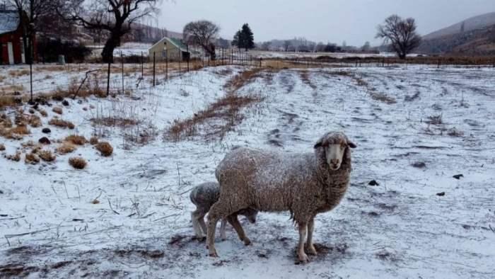 ЮАР, снег, морозы,