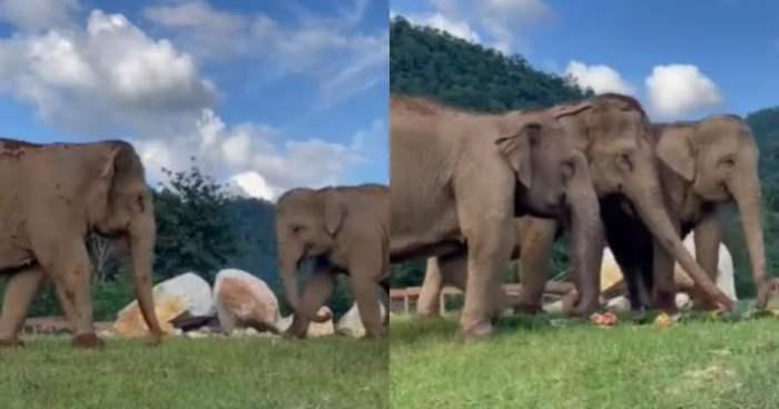 еда, слепой слон,