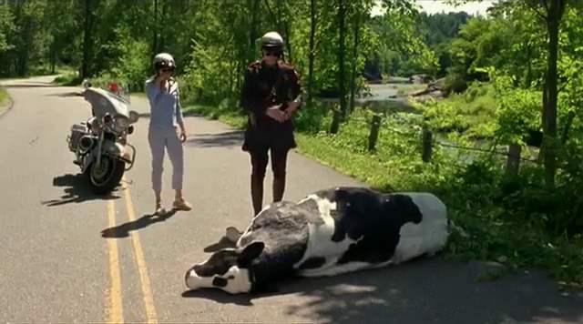 животное, на дороге, сбил животное,