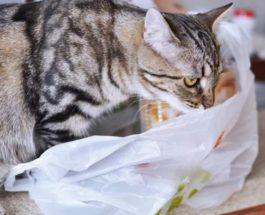 кошка, пластик, пакет, полиэтилен,