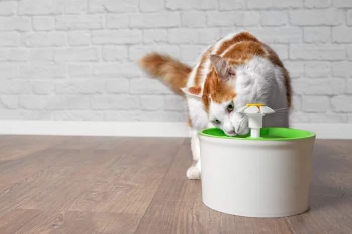 кошки, вода, советы, питье, жидкость, коты,