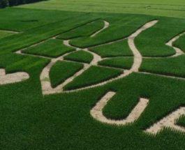поле, кукуруза, герб Украины,