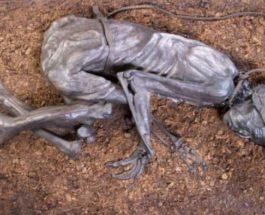 человек из Толунда, мумия, Дания,